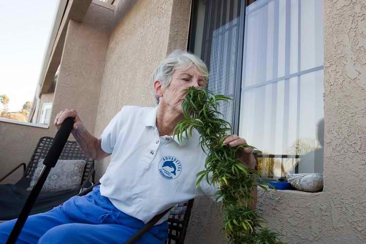 grandmaweed